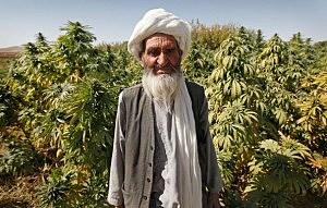 pot farmer