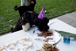 birthday party for Obama dog Bo