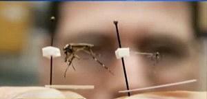 Mega Mosquito
