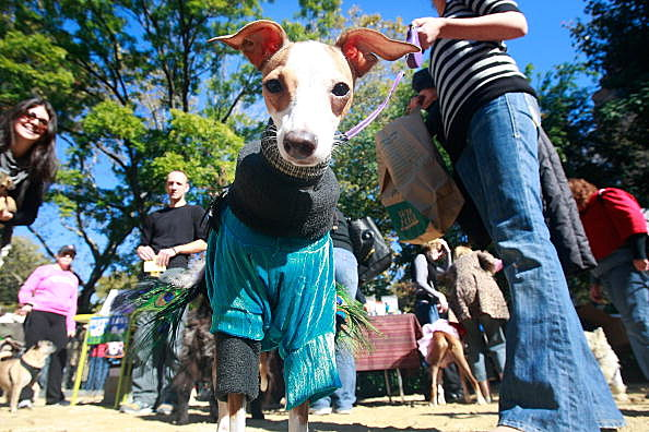 Pooches Parade Their Halloween Costumes In Annual NYC Dog Parade