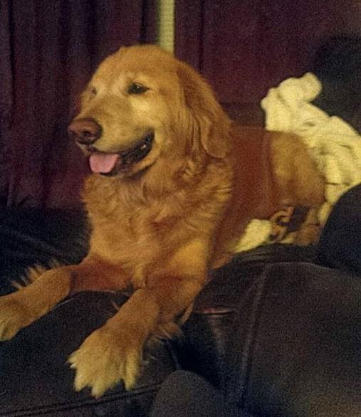 Lucy - Michael.Scott's Dawg