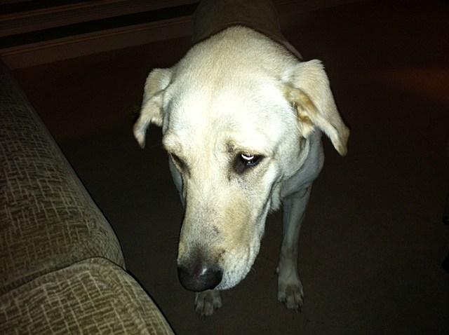 Shiloh - Winky Dinky Dawg's Dawg
