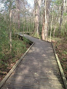 Elevated Wooden Paths at Acadiana Park Nature Trail