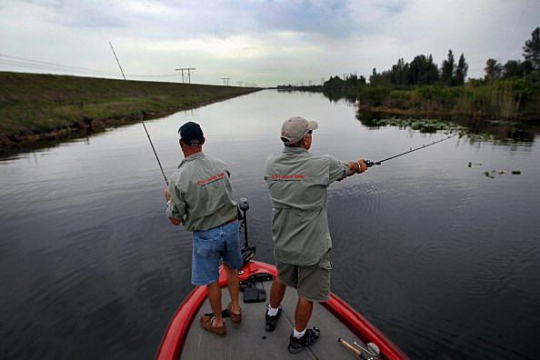 Florida Aims To Control Invasive Snakehead Fish Species