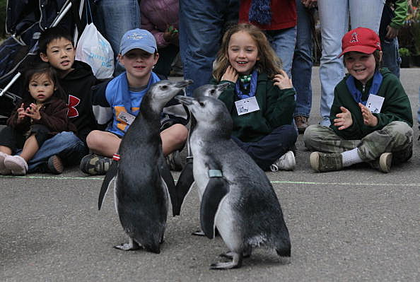 Three New Penguins Make Their Way To Penguin Island Exhibit At SF Zoo
