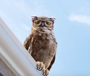 owls in advertising - companies think the bird is the word