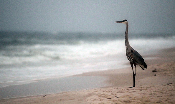 The Gulf Coast Commemorates One-Year Anniversary Of BP Oil Spill