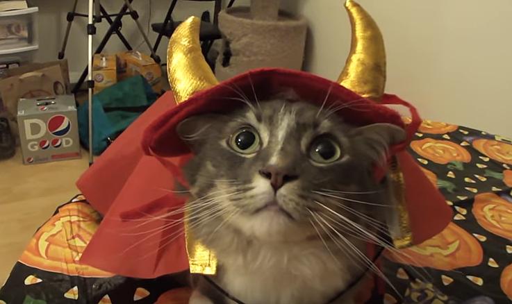Cats Talk Wednesday Youtube